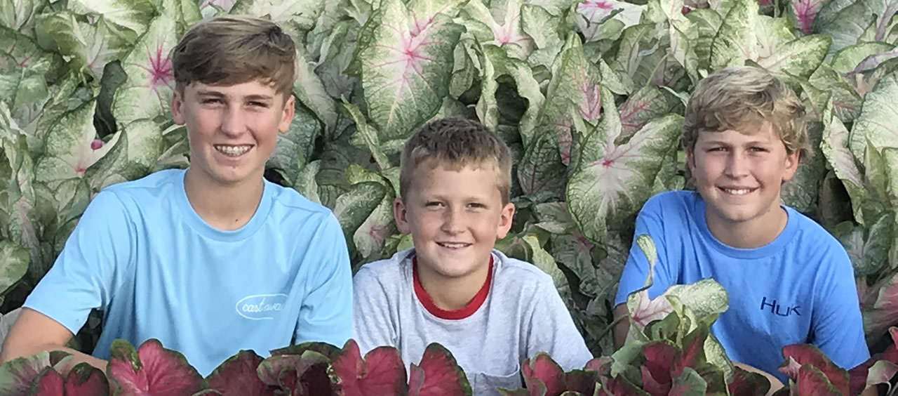 The Boys in a Caladium Field
